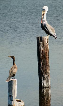 Two Birds Oakland International Airport  September 17. 2009