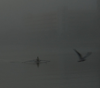 Rower and Bird