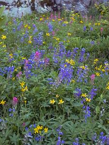Wildflowers | Mount Rainier National Park