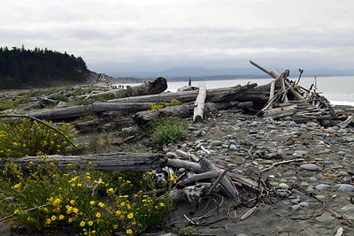 Dungeness Spit | Olympic National Park