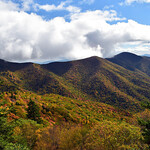 Blue Ridge Foliage | Blue Ridge Parkway