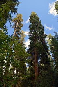Hoh Rain Forest | Olympic National Park
