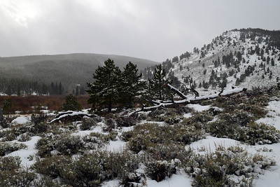 Hollowell Park Winter | Rocky Mountain NP