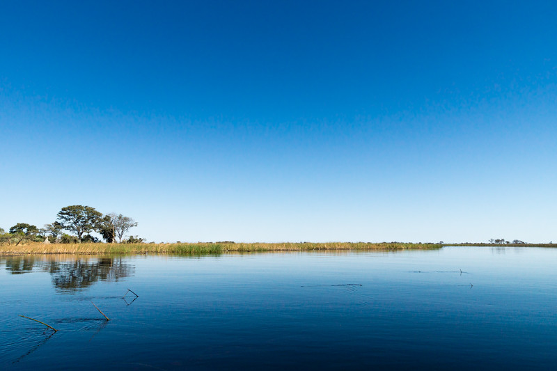 Okavango Morning Silence