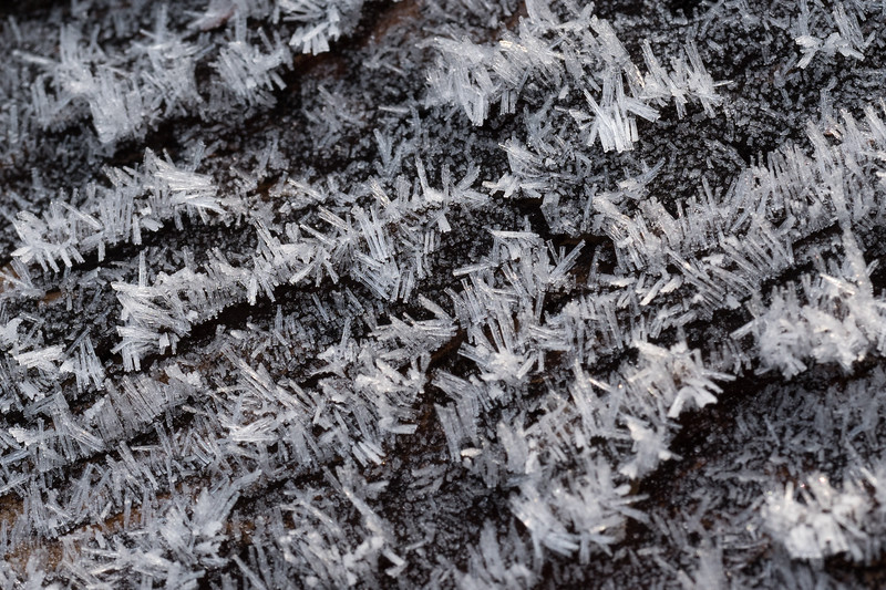 Delicate hoar frost on a log from a late May snow captured with dawn light at Shultz Tank, Flagstaff, AZ. Olympus OMD1 MII, 60mm Macro, ISO 200, f/8.0 @ 1/100 sec. Amy