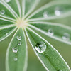 Asymmetry in the Morning Dew