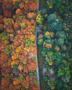 Autumn Colours, Co. Wicklow