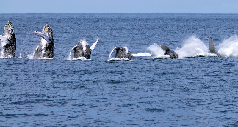 Dance of the Whale