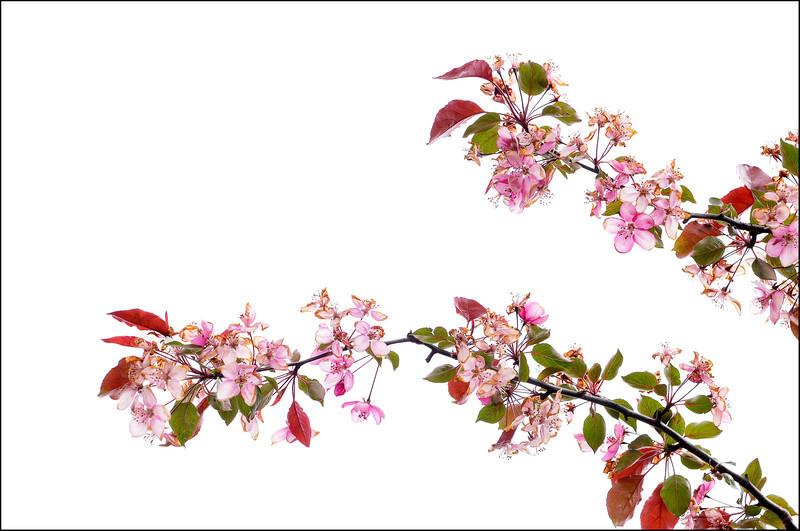 Glass Blossoms