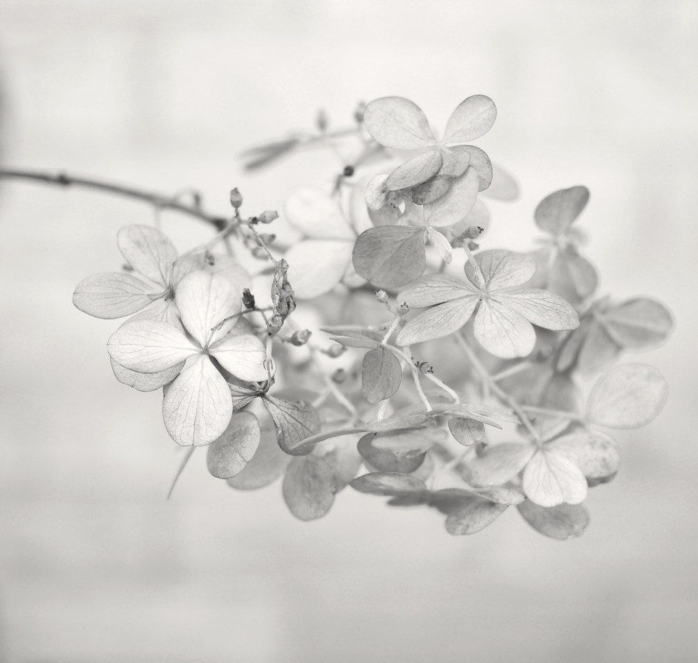 Soft Silver