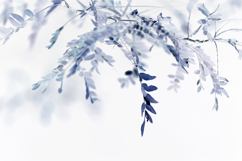 Blue Hush