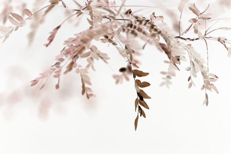 Bronzed Leaves