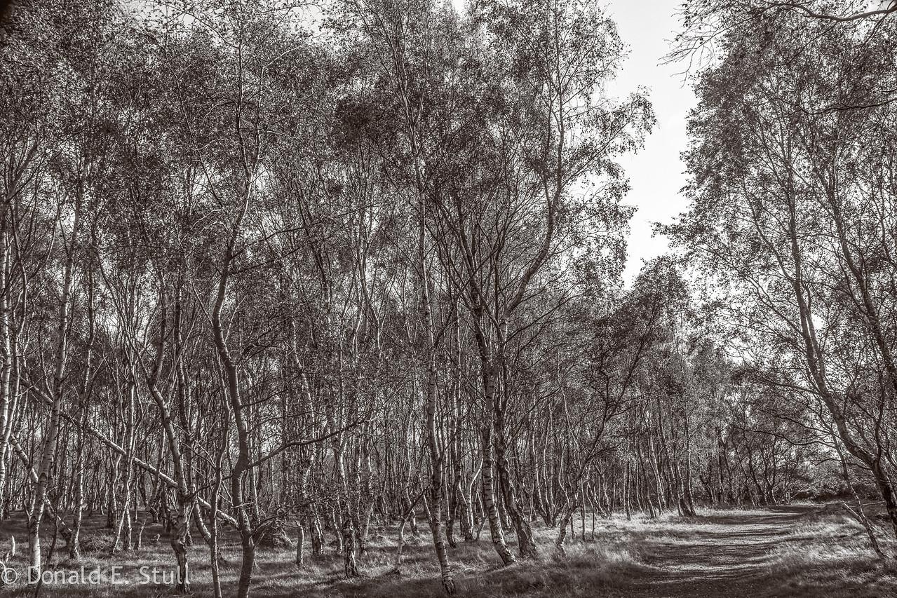 Birches, Stanage Edge, Hathersage, UK