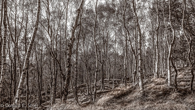 Birches, Stanage Edge, Hathersage, UK