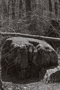 Rock and Tree:  Great Falls, Virginia, Potomac River
