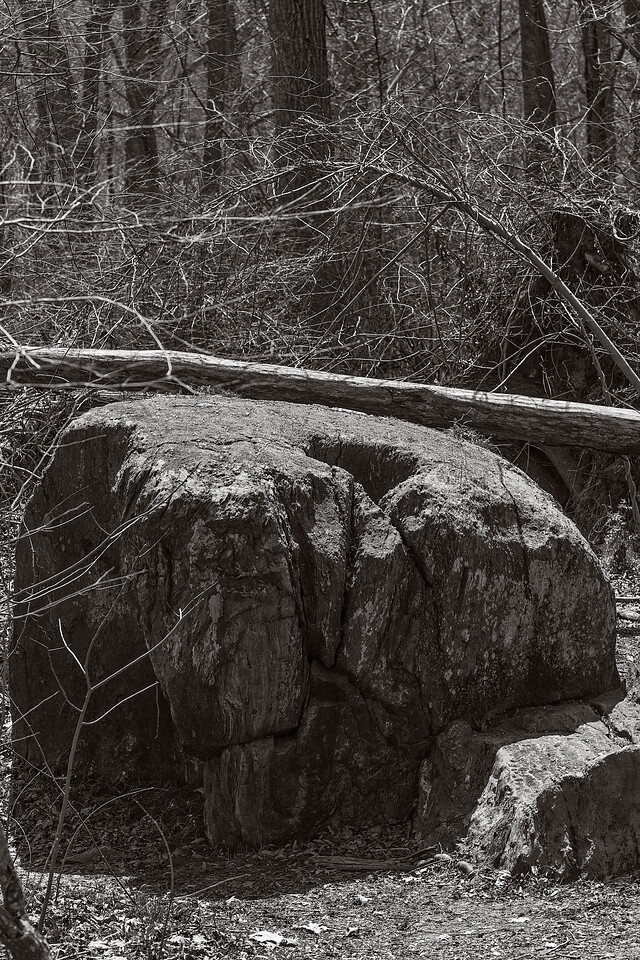 Rock and Tree:  Great Falls, Virginia, Potomac River