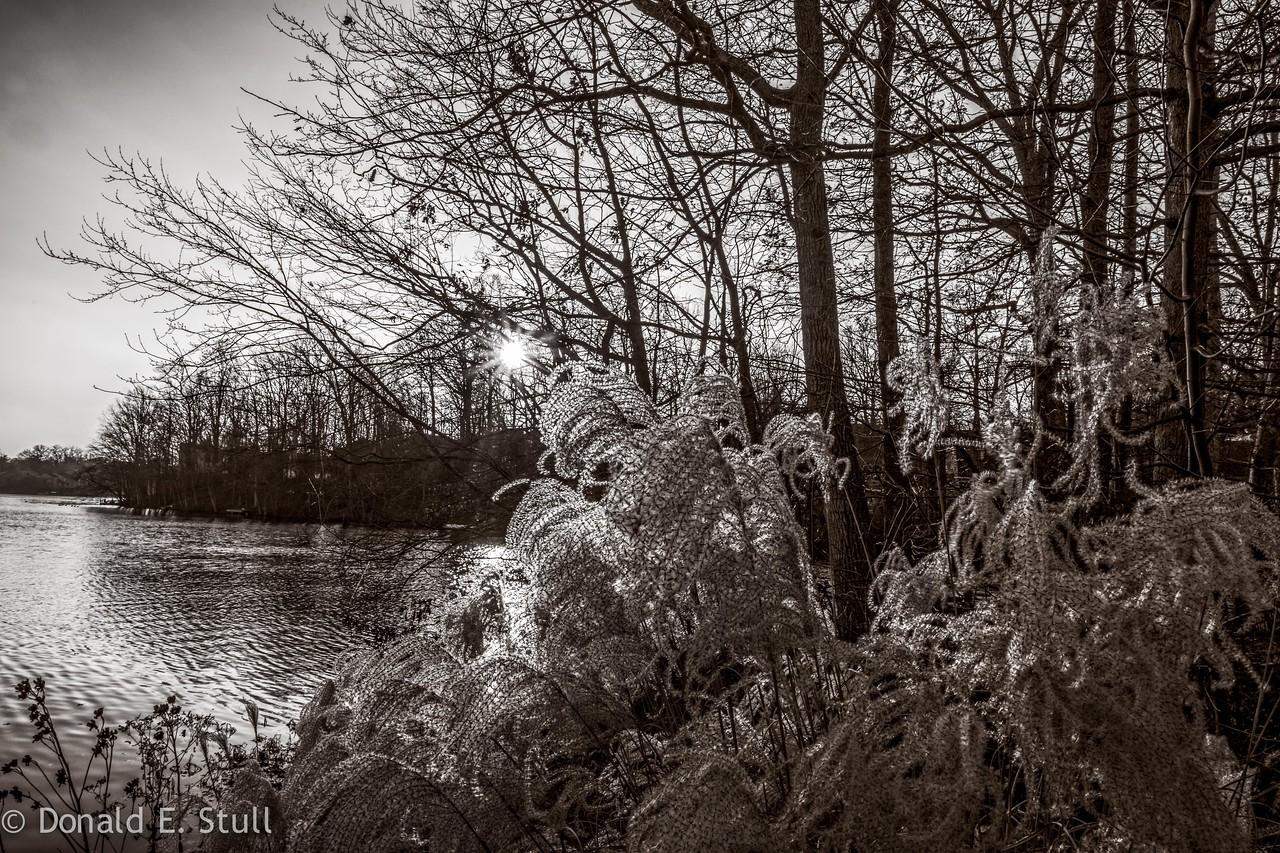 Lake Thoreau, Reston, VA