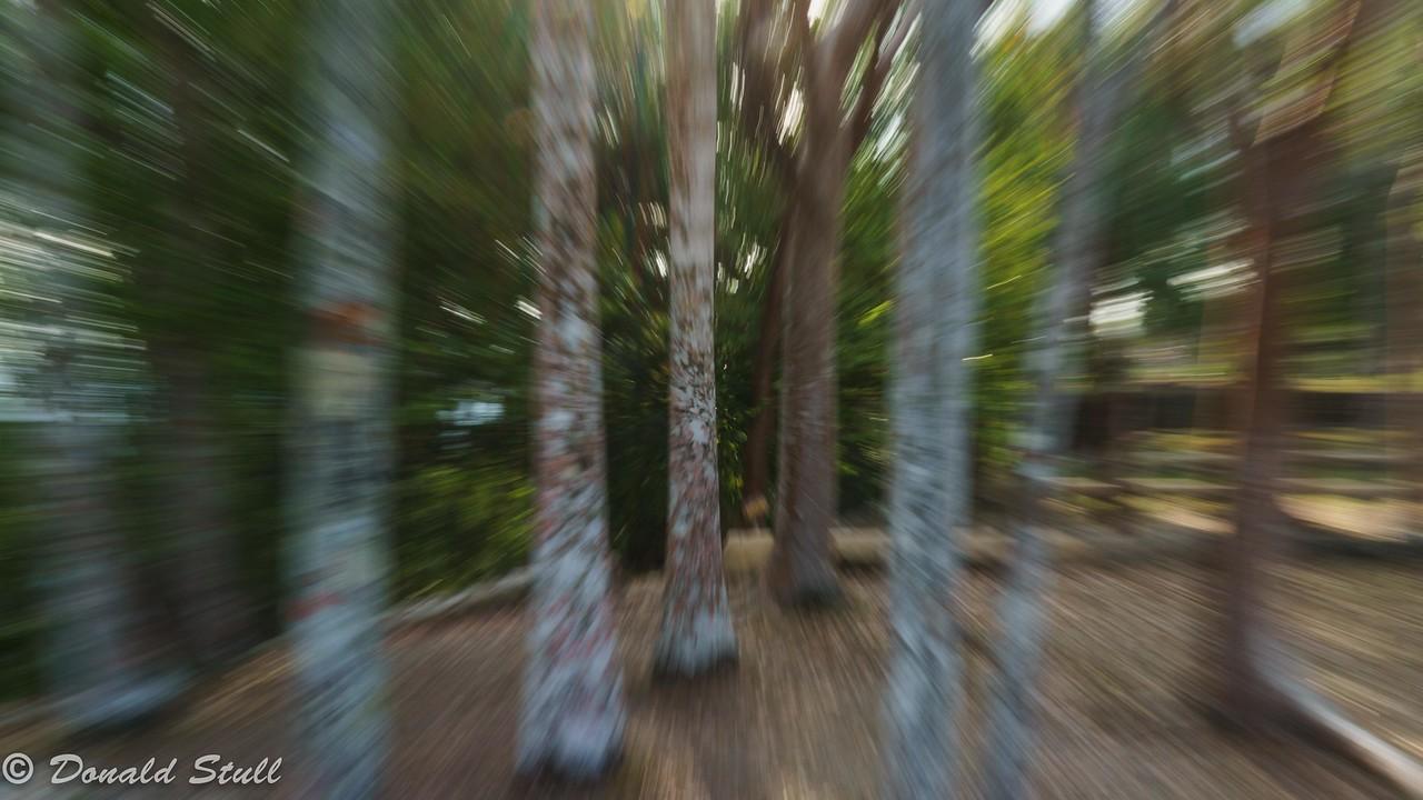 """""""Moving""""trees, Las Terrazas, Pinar del Rio, Cuba"""
