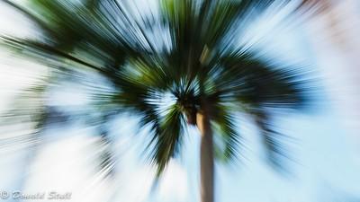 """""""Psycho Palm,"""" Las Terrazas, Pinar del Rio, Cuba"""