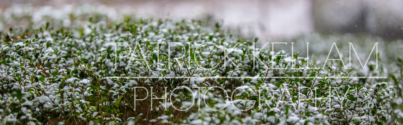 Snow - January 28, 2014
