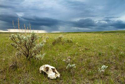 Prairie_Storm-1