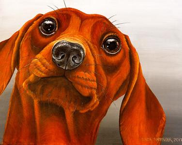Dash Dog