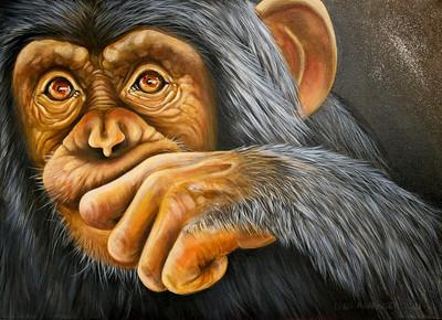 Chimp One
