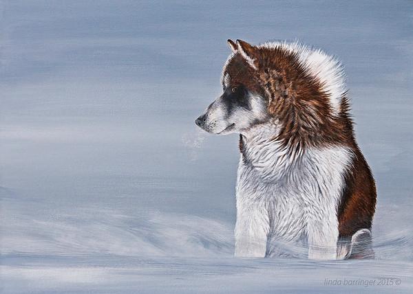 Eskimo Husky