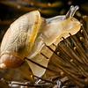 A snail navigates the sharp spines of a burdock, Stowe, VT.