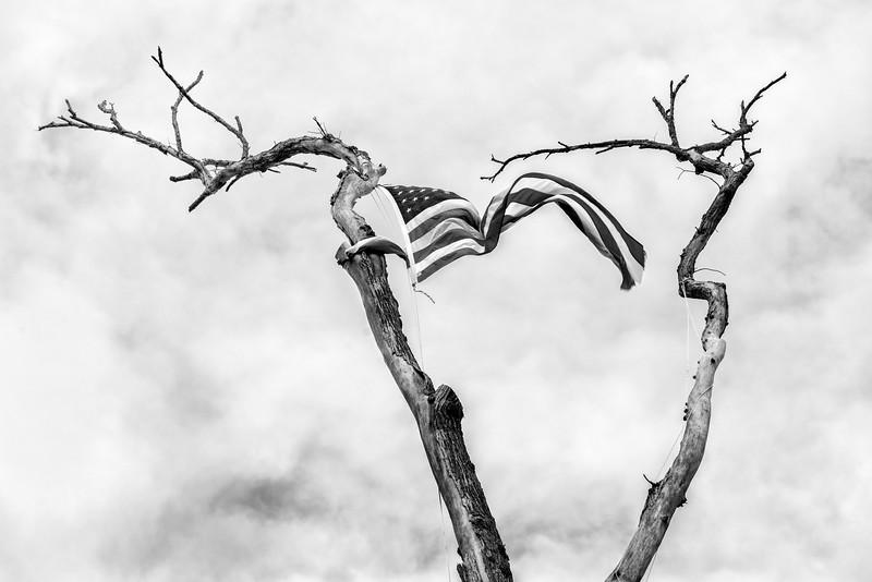 U.S. Flag in Elm Tree, Panton, 2017