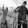 Wine MakerPatrick Barralet trims Marquette vines with owner Julie Lane and her son Alex.