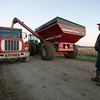 Silage Transfer at Dead Creek Wildlife Management Area, Addison, 2010
