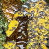 Poplar Leaf at Moss Glen Falls, Stowe, 2008