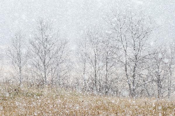 Snow Shower, Lyndon, 2012