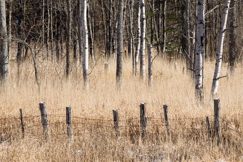 Fenceline and Trees, Orange, 2014