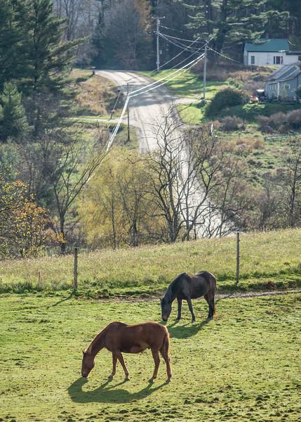 Grazing Horses, Morristown, 2014