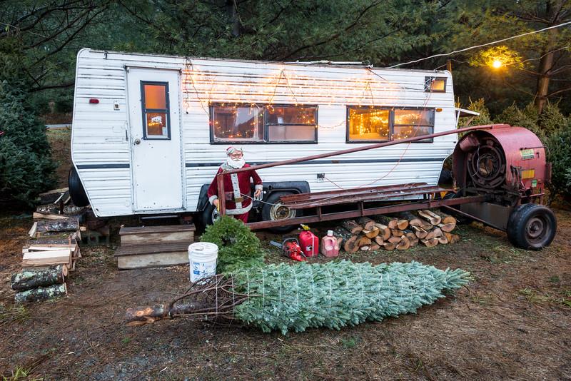 Christmas Tree Lot, Stowe, 2015