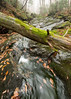 Mossy Log and Stream, Stowe, 2015