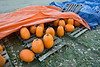 Pumpkins for Sale, Stowe, 2015