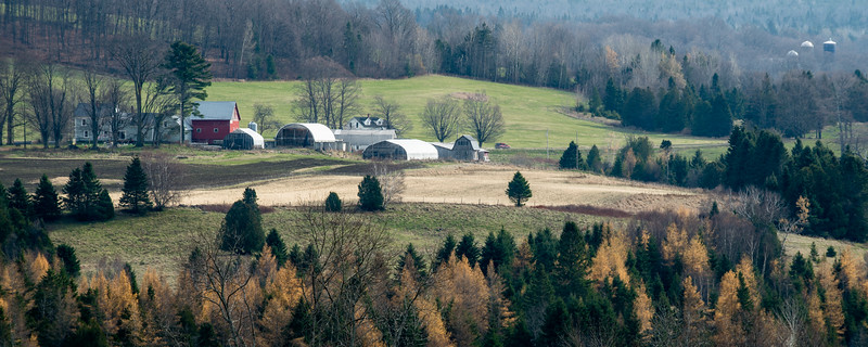 Bonnie View Sheep Dairy, Albany, 2013