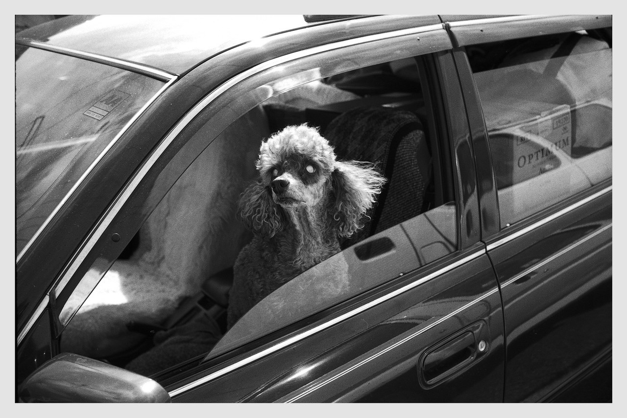Blind Dog Wellington 2005