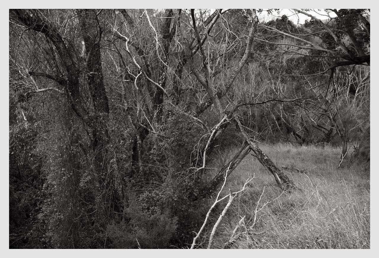 Longbush Trees   08/2016