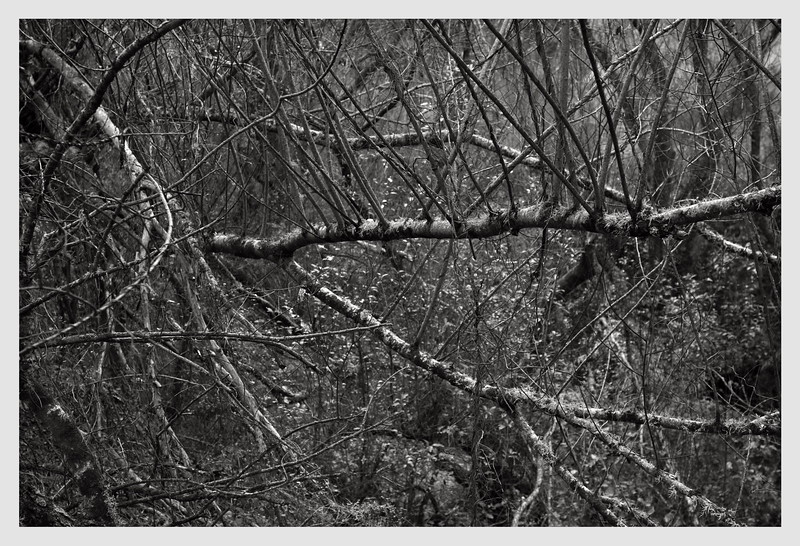 Longbush Trees   09/2016