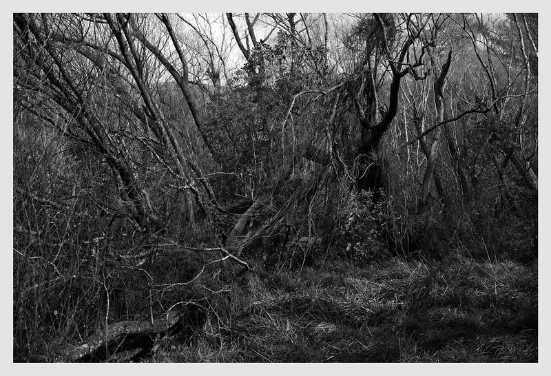 Longbush, Wairarapa  09/20