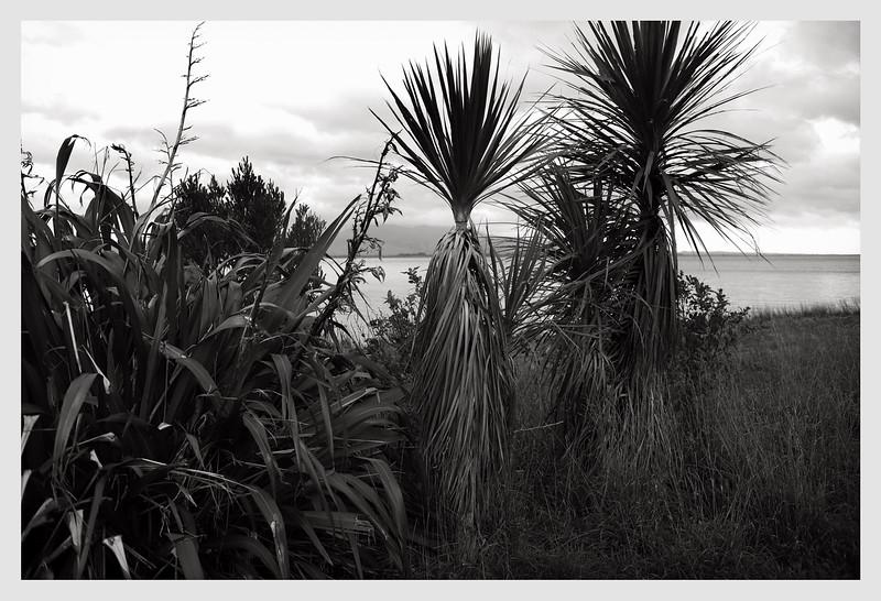 Lake Wairarapa 07/20