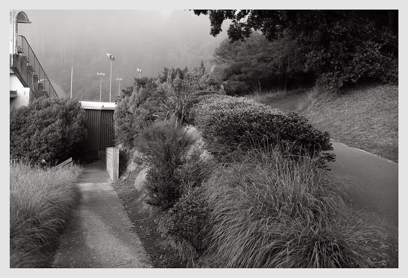 Wellington 04/20