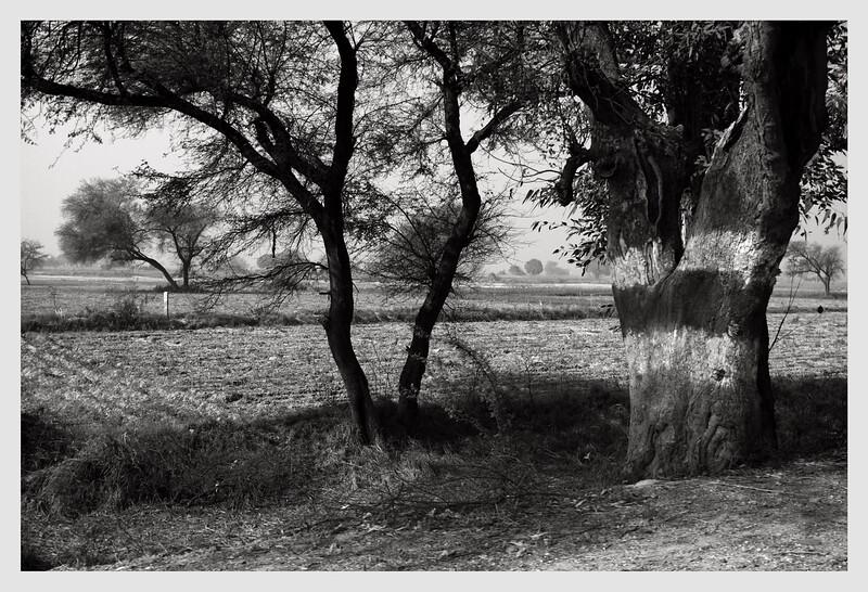 Rajasthan landscapes  2010