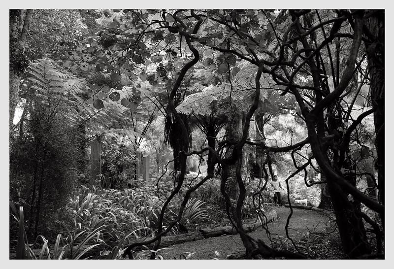 Wilton Bush, Wellington  06/21