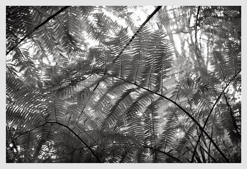 Wellington Central Park  10/21