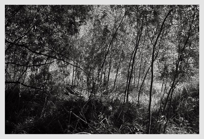 Arrow River, Otago  03/21